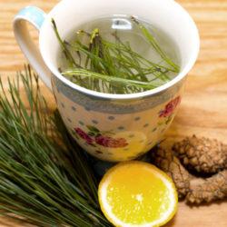 herbata z igieł sosny
