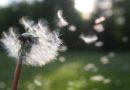 Kłopotliwe alergeny – jak sobie z nimi radzić?